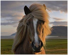 paarden spelletjes gratis