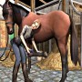 Cleaning and taking care of horse in i love horse riding academy collection game